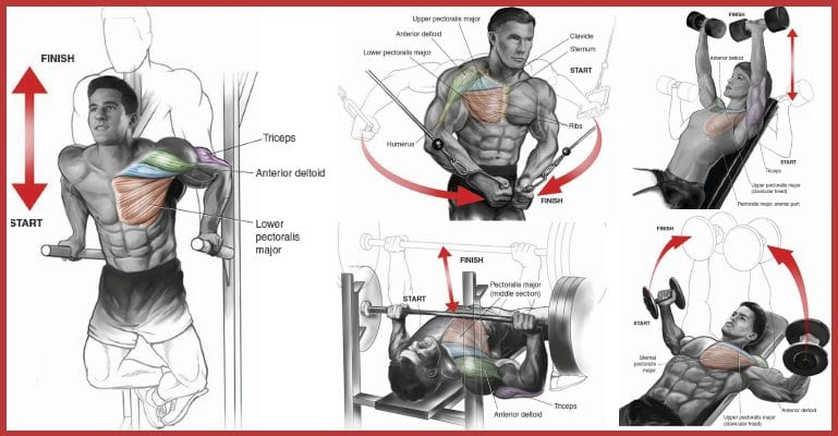 Perfect 7 Exercises and Techniques To Build The Upper Chest, According to Expert – Stay Strong